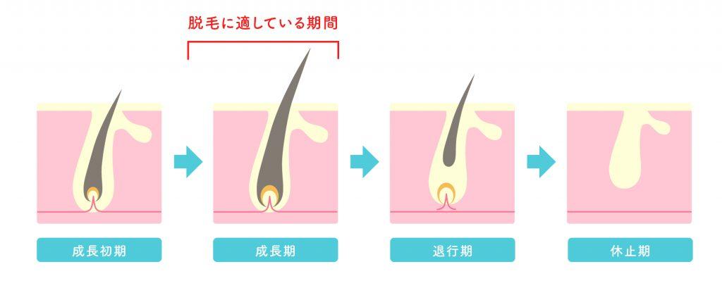 毛周期についての解説画像