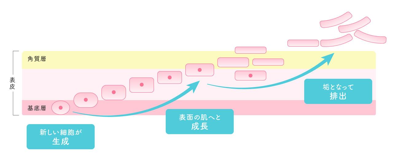 ターンオーバーのイメージ画像
